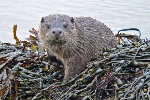 Otter-Cub